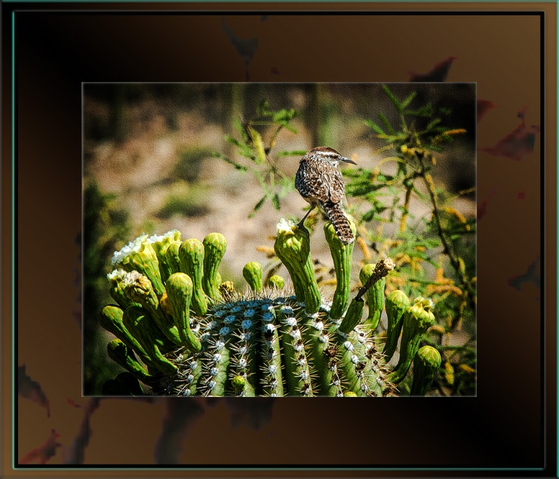 Cactus Wren (1 of 1)-3 blog