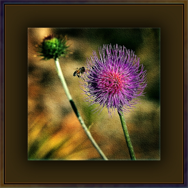 Friday with Friends & Molino Basin to Prison Camp