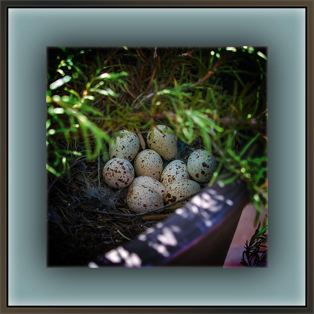 Morning Dove Eggs (1 of 1)-2 blog