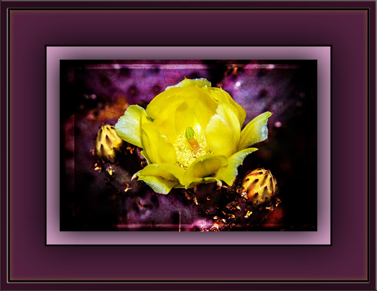 Penis Blossom Art blog