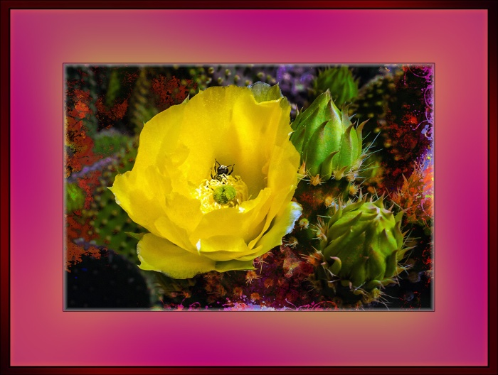 Prickly Pear Blossom (1 of 1) art blog