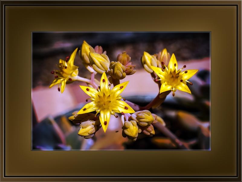 Succulent Blossoms (1 of 1)-2 blog