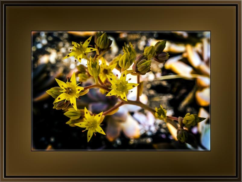 Succulent Blossoms (1 of 1) blog