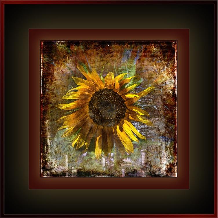 University Avenue Yard Flowers (1 of 1)-2 grunge art blog