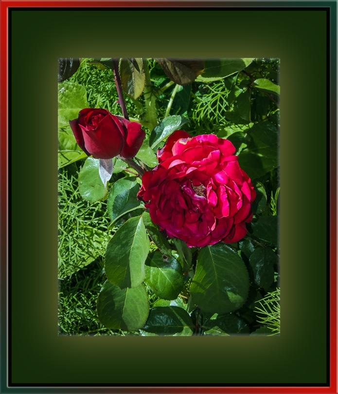 University Avenue Yard Flowers (1 of 1)-3 blog