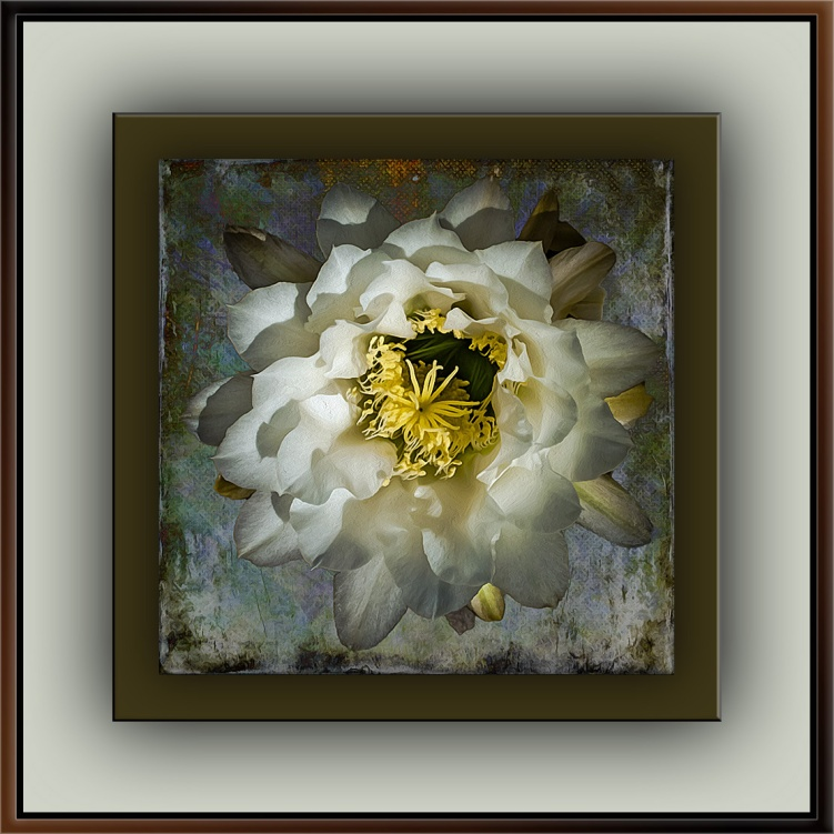 White Cactus Flowers (1 of 1)-9 art blog II