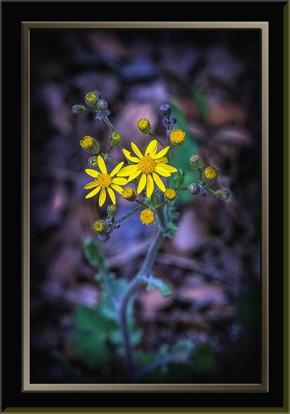 Wildflowers (1 of 1) blog II
