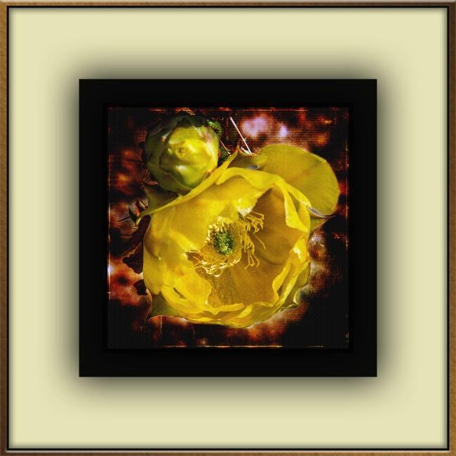 Yellow Cactus Flower (1 of 1) grunge art blog