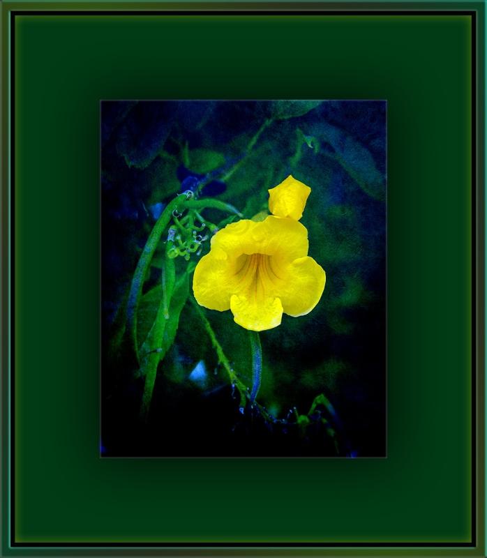 Yellow Flower (1 of 1) art blog