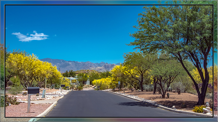 Palo Verde (1 of 1) blog II