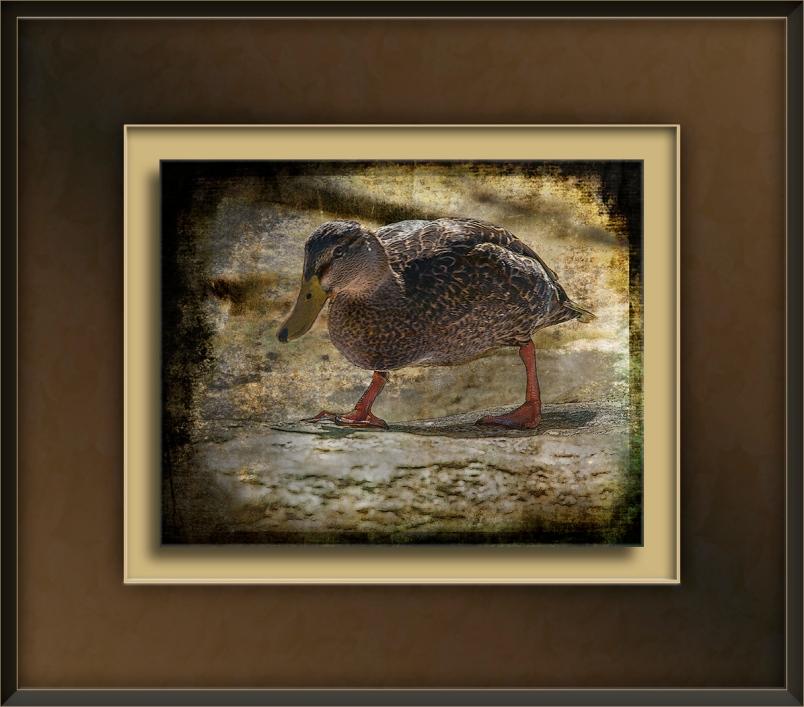 Sabino Canyon -9441 Duck Art blog.jpg