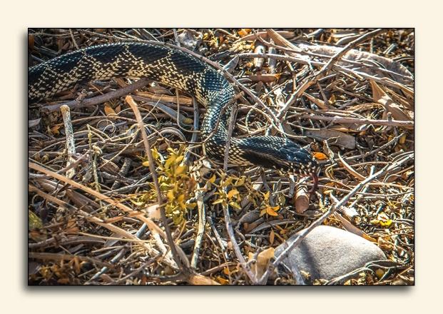 Snake (1 of 1)-2 blog