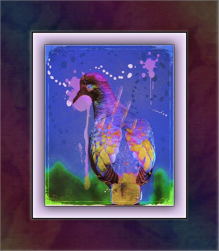 White-winged Dove (1 of 1) art blog