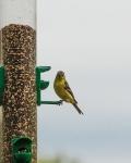 Bird Feeder (1 of 1)-3blog