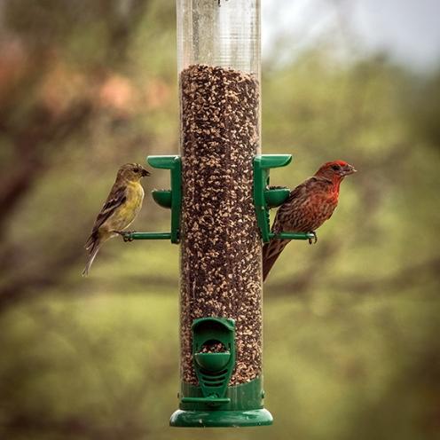 Bird Feeder (1 of 1)-4 blog