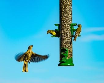 Bird Feeder (1 of 1)-6 blog
