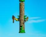 Bird Feeder (1 of 1)-8blog