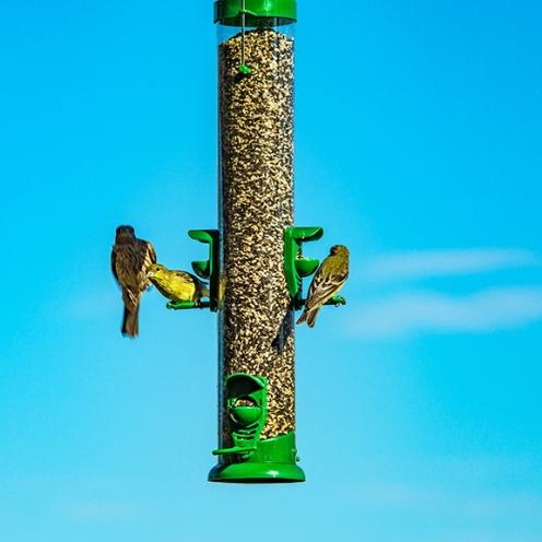 Bird Feeder (1 of 1)-8 blog
