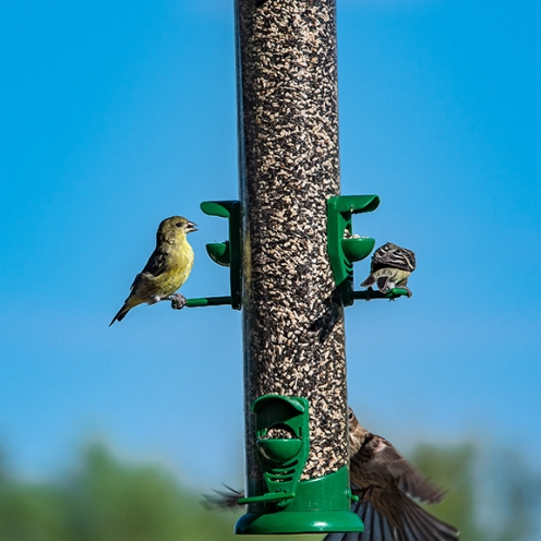 Bird Feeder (1 of 1)-9 blog