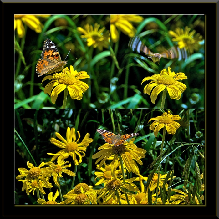 butterfly-collage-blog