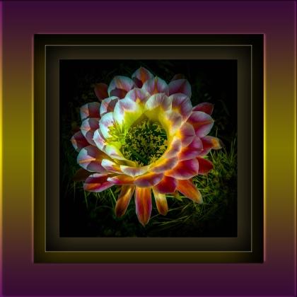 Cactus Flowers 06-19-16 (1 of 1) Art II blog