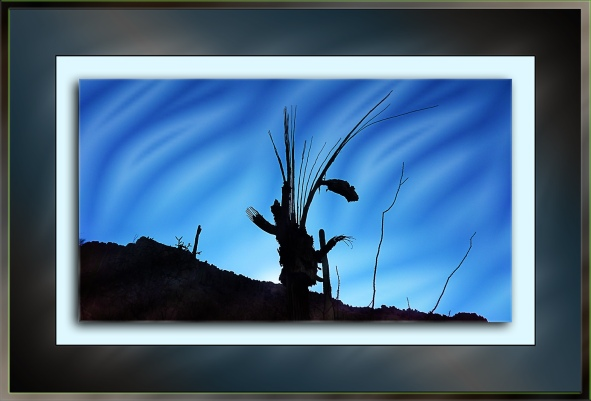 Dead Saguaro Shadow_0899-ghost-of-desert-past-blog
