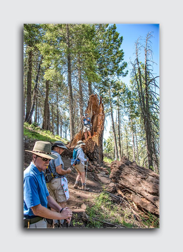 Downed Mt Lemmon Tree (1 of 1)-3 blog