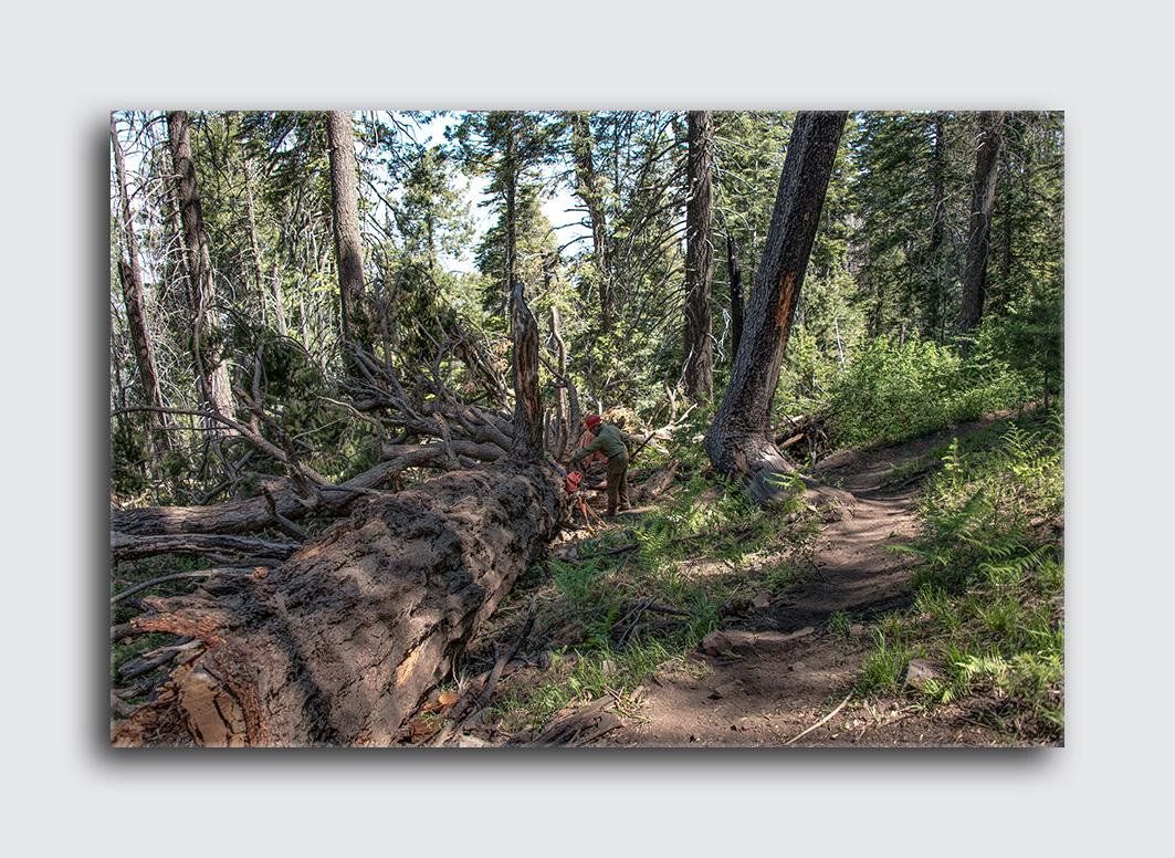 Downed Mt Lemmon Tree (1 of 1)-4 blog