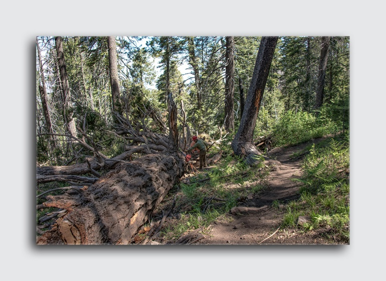 Downed Mt Lemmon Tree (1 of 1)-4 blog