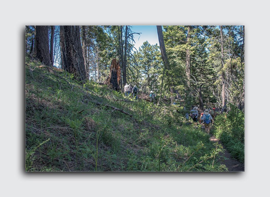 Downed Mt Lemmon Tree (1 of 1) blog