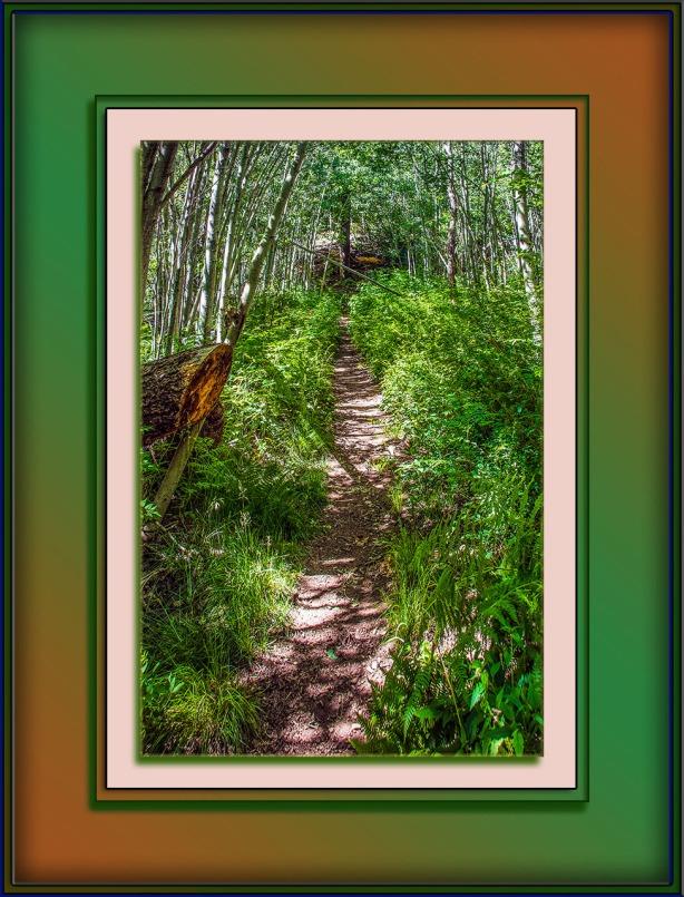 Aspen Trail (1 of 1)-2 blog