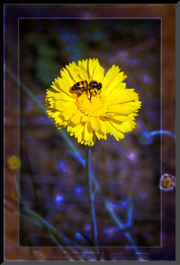 Bee on Yellow Flower (1 of 1) art blog