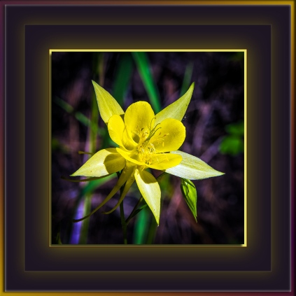 Columbine (1 of 1)-2 blog