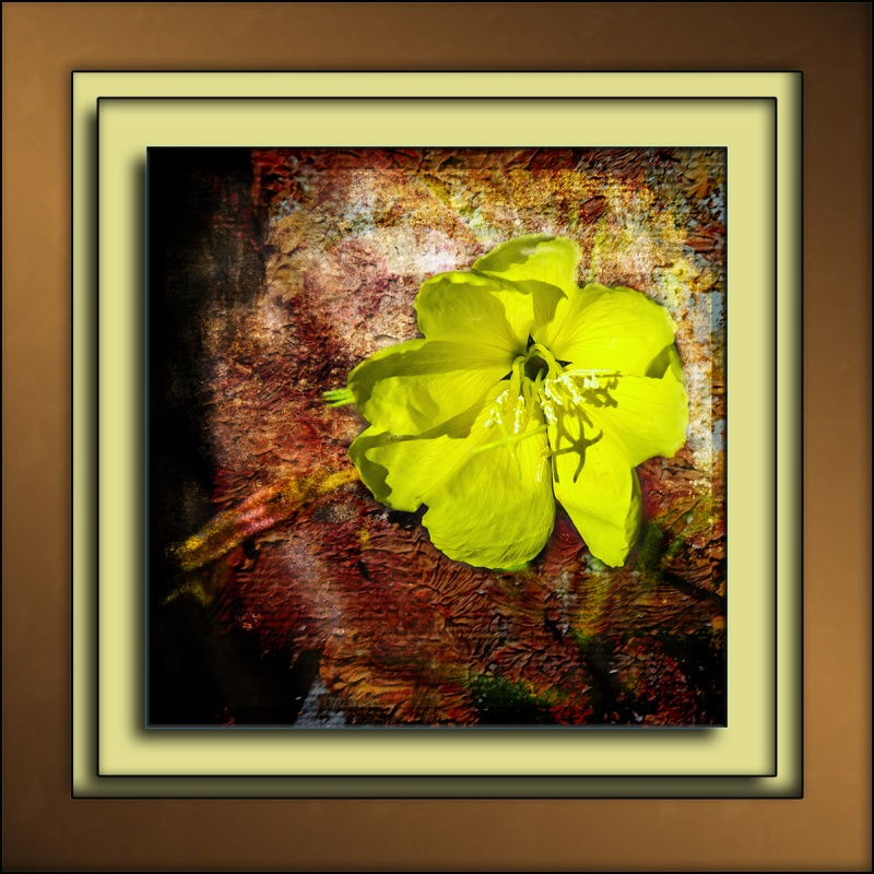 Hooker's Evening Primrose (1 of 1)-2 art blog