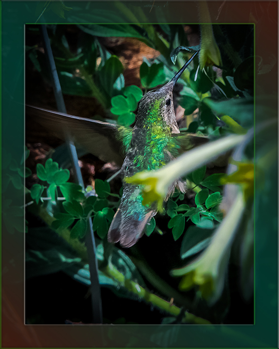 Hummingbird (1 of 1) blog.jpg