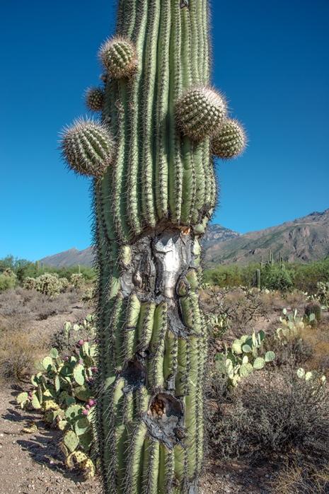 Sabino Canyon (1 of 1)-2 blog