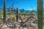 Sabino Canyon (1 of 1) blog