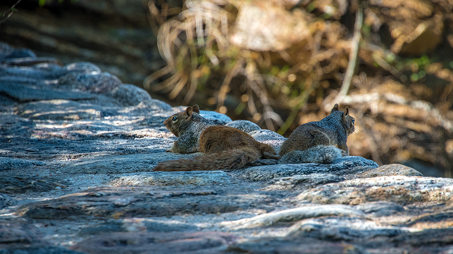 Squirrels (1 of 1) blog