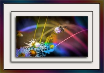 Arizona Fleabane & Bee (1 of 1) art blog