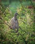 Dove (1 of 1)-2blog