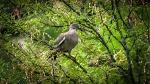 Dove (1 of 1)blog