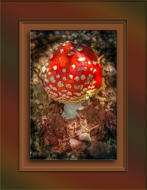 Fly Agaric mushroom (1 of 1) art blog