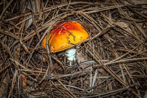Mushroom (1 of 1)-10 blog