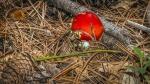 Mushroom (1 of 1)-11blog