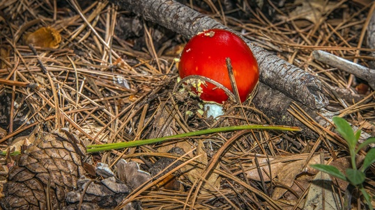 Mushroom (1 of 1)-11 blog