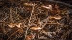 Mushroom (1 of 1)-13 blog