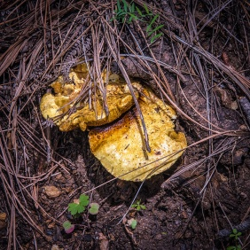 Mushroom (1 of 1)-9 blog