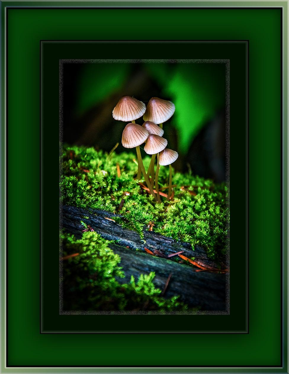 Mushrooms (1 of 1)-2 blog