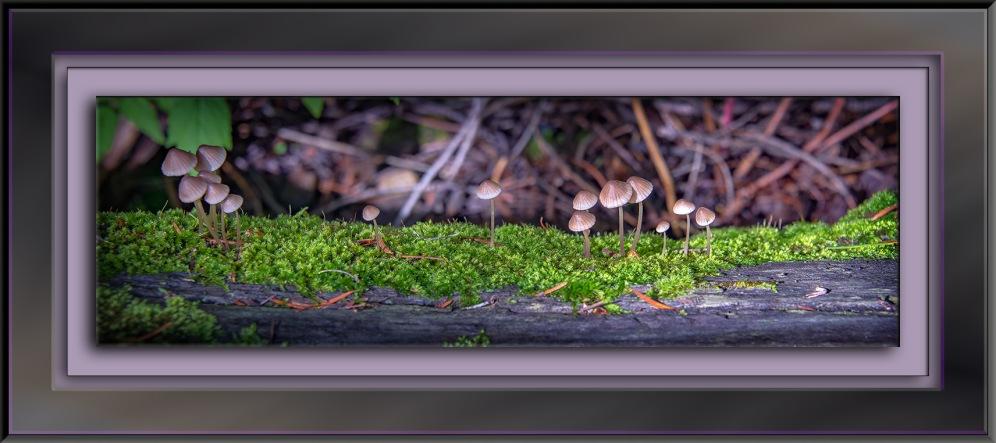 Mushrooms (1 of 1) blog