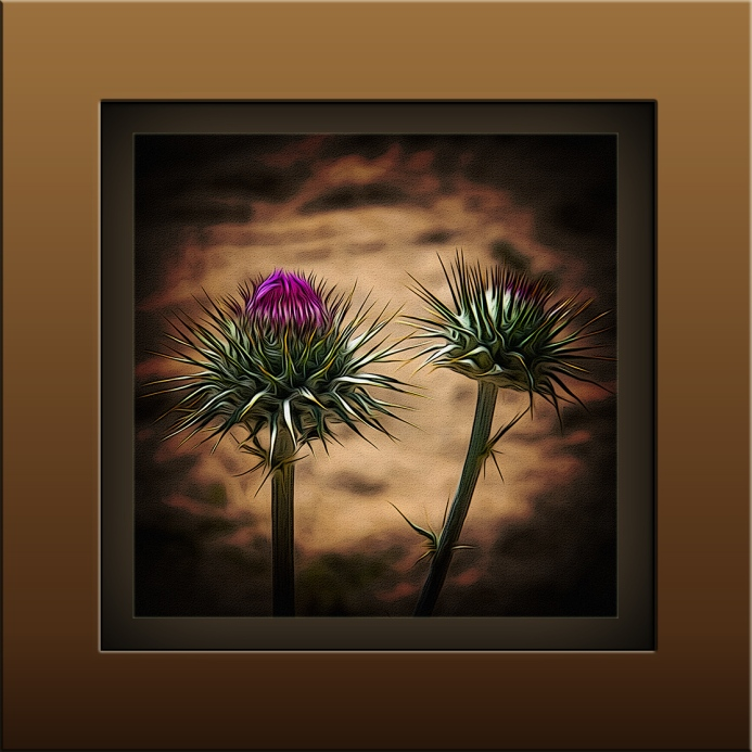 Thistle (1 of 1)-2 art blog